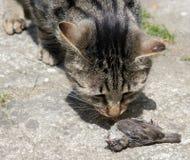 Katze jagte einen Vogel Stockbild