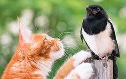 Katze jagte einen Vogel Stockfotografie