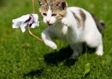Katze/Kätzchen stockfotografie
