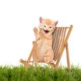 Katze/Kätzchen, das im Klappstuhl/in Sunlounger sitzt Stockbilder