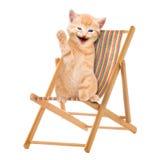 Katze/Kätzchen, das im Klappstuhl/in Sunlounger sitzt Stockbild