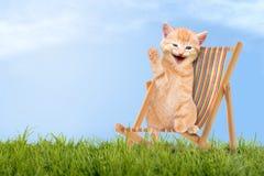Katze/Kätzchen, das im Klappstuhl/in Sunlounger sitzt Stockfotos