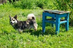 Katze, Kätzchen und Kuh Kleines Haustier ukraine lizenzfreie stockfotos