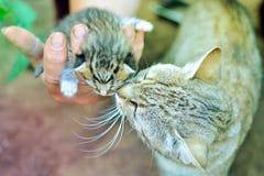Katze küsst es ` s neugeborene Tochter in Mann ` s Hand stockfotos