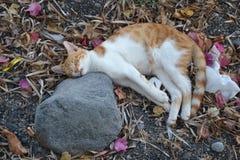 Katze in Kamari Lizenzfreies Stockfoto