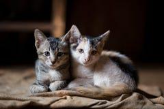 Katze, kleine Katzen A, paart Katzen lizenzfreies stockbild