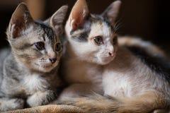 Katze, kleine Katzen A, paart Katzen stockbilder