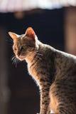 Katze, kleine Katzen A, paart Katzen lizenzfreies stockfoto