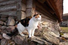 Katze in Koguva-Dorf Stockbilder