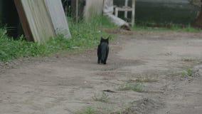 Katze läuft weg in das im Freien stock footage