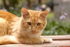 Katze legt auf eine Bank Stockfoto