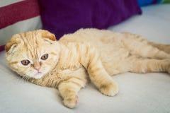 Katze legt auf einen Trainer mit Kissen Stockbild