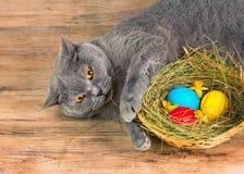 Katze legt nahe Korb mit farbigen Eiern Stockbilder