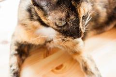 Katze legt nieder Stockbilder