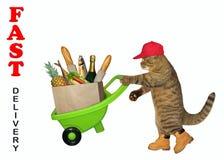 Katze liefert Nahrung durch Karren lizenzfreie stockfotografie