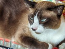 Katze liegt lizenzfreie stockfotografie