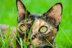 Katze liegt Stockfotografie