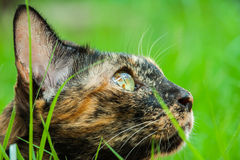 Katze liegt Lizenzfreie Stockbilder