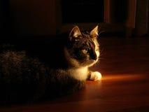 Katze liegt auf dem Fußboden Stockbild
