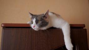 Katze liegt auf dem Wandschrank stock video footage