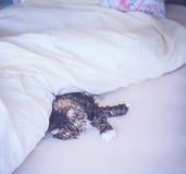 Katze liegt bequem im Bett lizenzfreie stockfotos