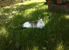 Katze liegt im Gras und schaut mit Stirnrunzeln vertraulich stockbilder