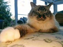 Katze mögen ein Plüschspielzeug stockbild