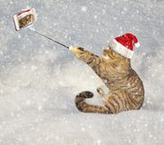 Katze macht Foto auf Schnee lizenzfreies stockbild