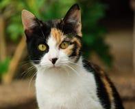 Katze mit 3 Farben Stockbilder