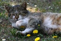 Katze mit Stockbild