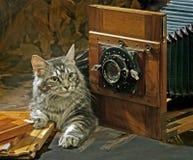 Katze mit alter Kamera Lizenzfreies Stockfoto