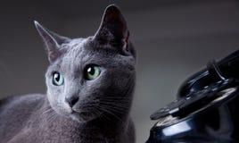 Katze mit antikem Telefon Stockfotos
