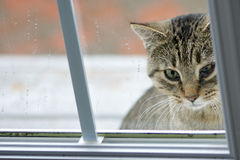 Katze mit Augen-Infektion Lizenzfreies Stockbild