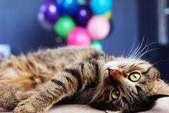 Katze mit Ballons Lizenzfreie Stockfotos