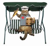 Katze mit Bier ist auf einer Schwingenbank stockbild