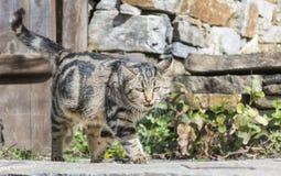 Katze mit dem Anpirschen der grünen Augen Stockbild