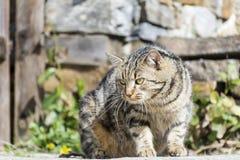 Katze mit dem Anpirschen der grünen Augen Stockbilder