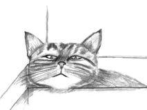 Katze mit dem Hauptstillstehen Stockbild