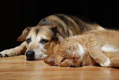 Katze mit dem Hund, der auf Boden liegt stockfoto