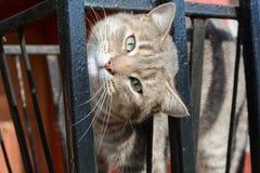 Katze mit dem Kopf gebeugt Stockbilder