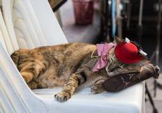 Katze mit dem Kostümschlafen stockbilder