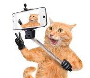 Katze mit den Friedensfingern im schwarzen Leder, das ein selfie zusammen mit einem Smartphone nimmt Lizenzfreies Stockbild