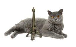 Katze mit den gelben Augen, die über die Zahlen des Eiffelturms liegen Stockbilder