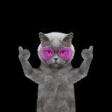 Katze mit den Gläsern, die sich Daumen und Willkommen zeigen -- Isolat auf bla Stockfotografie