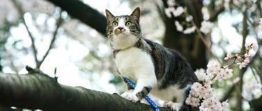 Katze mit den gr?nen Augen, die auf einem Baumstamm sitzen stockfoto