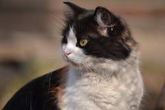 Katze mit drei Farben Stockfotos