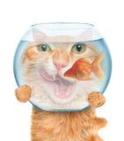 Katze mit einem Aquarium Stockfotos