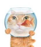 Katze mit einem Aquarium Stockbilder
