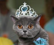 Katze mit einem Diadem. stockfotografie