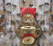Katze mit einem großen Tasse Kaffee 2 lizenzfreie stockbilder